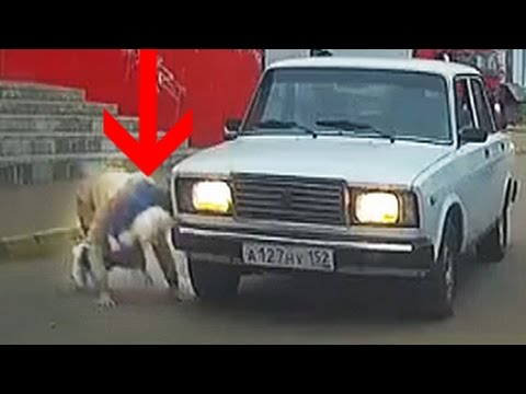 OMG! This Lucky Pedestrian Almost Had Her Head Ran Over!